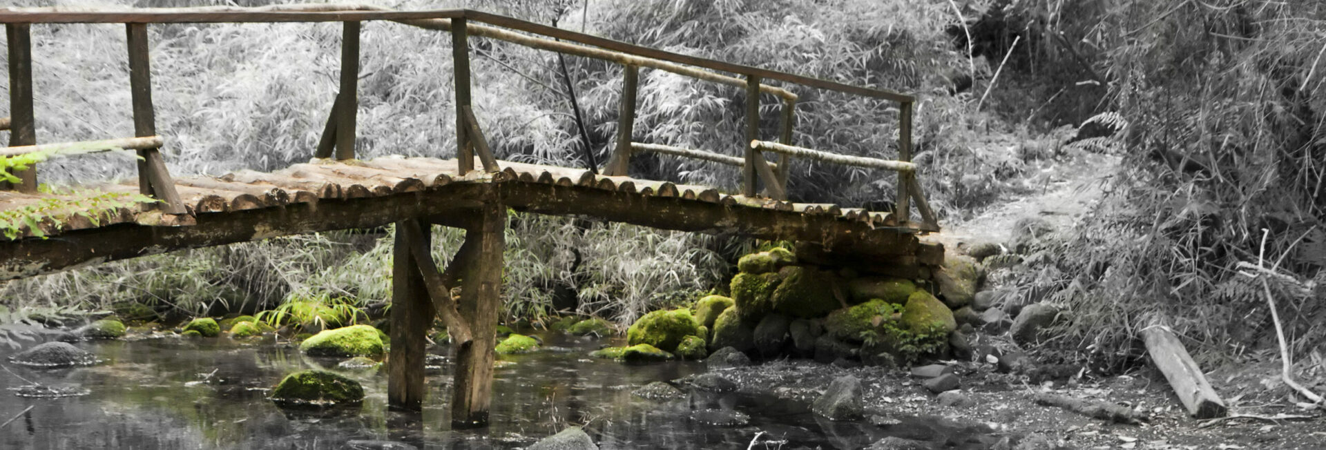 Small wooden bridge over a stream in a forest